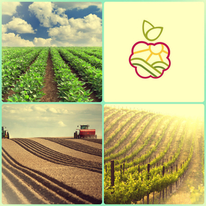 Саженцы плодово-ягодных в Караганде.