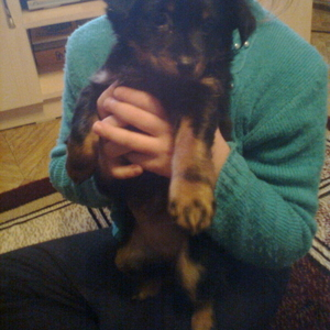 Продаю щенка